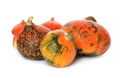 Fresh orange raw pumpkins isolated Stock Images