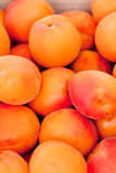 Fresh orange red apricots peaches macro closeup on market Royalty Free Stock Images