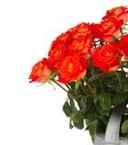 Fresh  orange  roses close up Stock Images