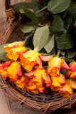 Fresh orange roses Royalty Free Stock Images