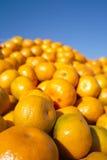 Fresh orange tangerines Stock Photography