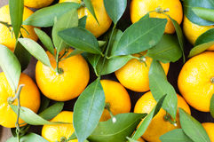 Fresh orange tangerines with green leaves.  Stock Images