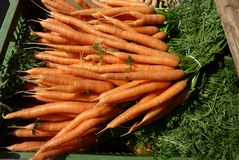 Fresh orange vegetable Royalty Free Stock Photos