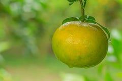 Fresh orange with waterdrop Stock Photography