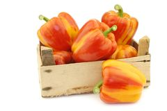 Fresh orange and yellow `enjoya` bell peppers capsicum in a wooden crate. On a white background royalty free stock image