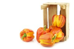 Fresh orange and yellow `enjoya` bell peppers capsicum in a wooden crate. On a white background stock images
