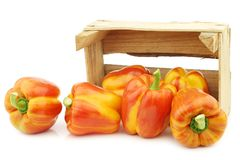Fresh orange and yellow `enjoya` bell peppers capsicum in a wooden crate. On a white background royalty free stock photo