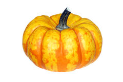 Fresh orange yellow patched pumpkin. Isolated on white background Stock Photos