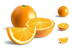 Fresh Oranges vector illustration