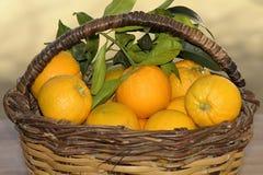 Fresh oranges on Basket Stock Image