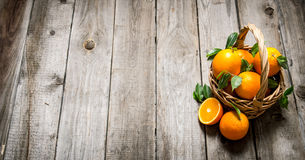 Fresh oranges in the basket with leaves. Stock Photos