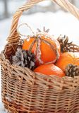 Fresh Oranges with a Bow from Cord and Pine Cones Stock Image