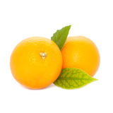 Fresh Oranges with Leaves. Fresh oranges with green leaves isolated on a white background royalty free stock photos