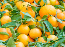 Fresh oranges with leaves Royalty Free Stock Photo