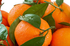 Fresh oranges with leaves Royalty Free Stock Photography