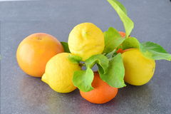 Fresh oranges, lemons and mandarines on a grey abstract background. Mediterranean lifestyle. Healthy food Royalty Free Stock Photography