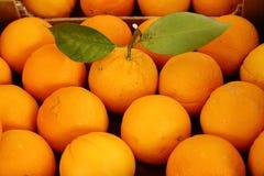 Fresh oranges Royalty Free Stock Photos