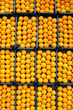 Fresh oranges ready to sale Stock Image