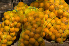 Fresh oranges. Several large sacks filled with fresh oranges Stock Images