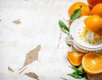 Fresh oranges Stock Photo