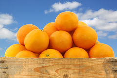 Fresh oranges and two halves Royalty Free Stock Photos
