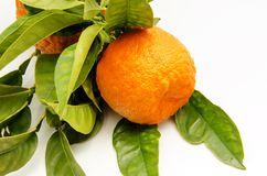 Fresh oranges Royalty Free Stock Photos