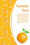 Fresh Orangy Background Royalty Free Stock Images