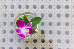 Fresh orchid flower in glass. Stock Photography