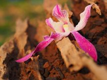 Fresh orchid. At resort in countryside stock image