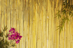Fresh orchids with bamboo Stock Photography