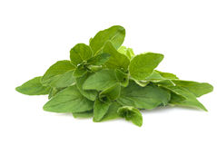 Fresh oregano Royalty Free Stock Photos