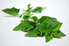 Fresh oregano Royalty Free Stock Images