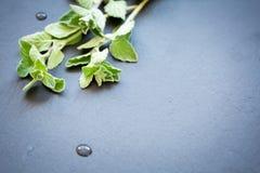 Fresh oregano on a dark stone background Royalty Free Stock Images