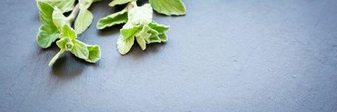Fresh oregano on a dark stone background Stock Images