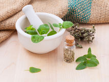 Fresh oregano and dry with mortar . Stock Images