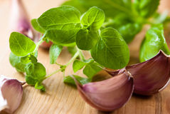 Fresh oregano and garlic Stock Image