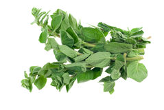 Fresh oregano herb Royalty Free Stock Photo