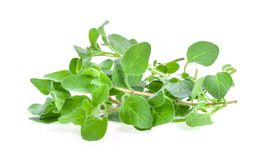 Fresh oregano herb on white background. Fresh oregano herb on a white background royalty free stock photo