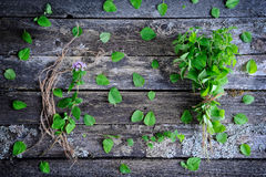Fresh oregano herb Stock Images