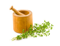 Fresh Oregano with Mortar and Pestle stock photo