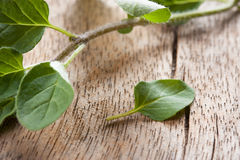 Fresh oregano sprig over wooden table Stock Photography