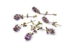 Fresh oregano thyme flowers Stock Images