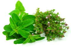 Fresh oregano and thyme on white. Fresh herbs straight from the garden, ready to be used in the kitchen. Isolated against white background Royalty Free Stock Images