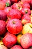 Fresh organic apples on street market stall Stock Image