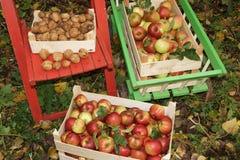 Fresh Organic Apples Royalty Free Stock Photography