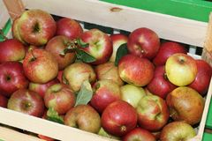 Fresh Organic Apples Stock Photos