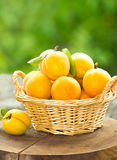 Fresh organic apricot Royalty Free Stock Photography