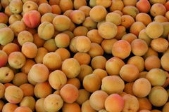 Fresh Organic apricotes royalty free stock photos