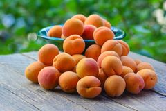 Fresh organic apricots Stock Photos
