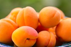 Fresh organic apricots in green vase Stock Images
